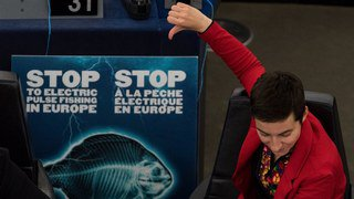 Le Parlement européen demande l'interdiction de la pêche électrique