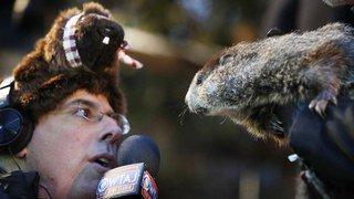 Etats-Unis: Phil la marmotte prédit un hiver plus long de 6 semaines, un rongeur québécois le contredit