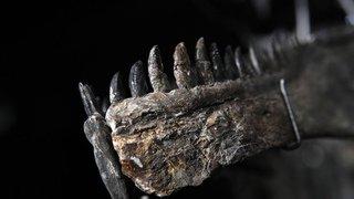 Paris: deux squelettes de dinosaures vendus aux enchères