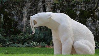 Un ours morse et d'autres drôles de rencontres en France voisine
