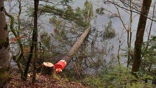 Les Brenets: ils couchent des sapins dans le Doubs pour attirer le brochet