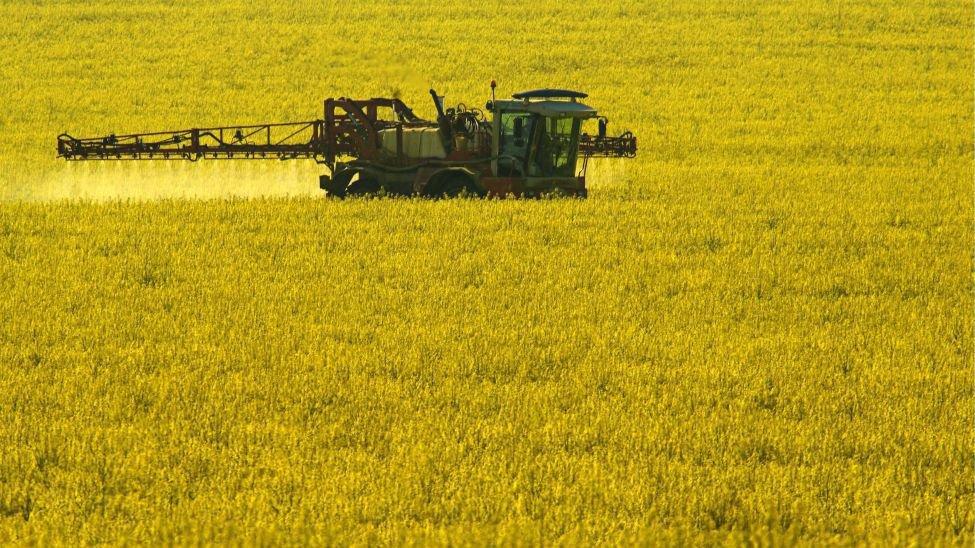 Des pesticides épandus sur un champ de colza en Allemagne.