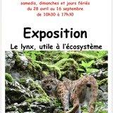 Le lynx, utile à l'écosystème