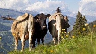 Agriculture: les producteurs prêts à créer une norme pour le lait durable