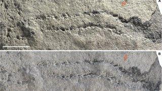 Les plus anciennes empreintes d'animaux de la planète découvertes en Chine