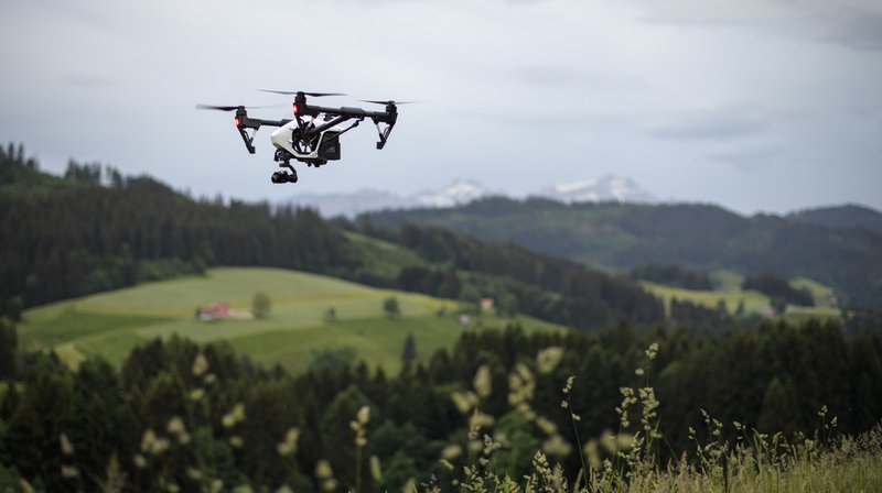 Faune: les drones dérangent les oiseaux et les animaux sauvages