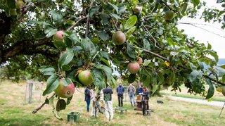 Un musée des fruits et de la distillation ouvre ses portes à Porrentruy