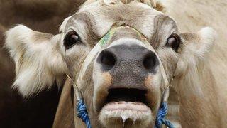 Un marchand de bestiaux qui a perdu sa patente est accusé d'avoir vendu des animaux