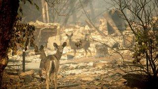 Incendies en Californie: le bilan du «Camp Fire» monte à 63 morts et plus de 600 personnes portées disparues