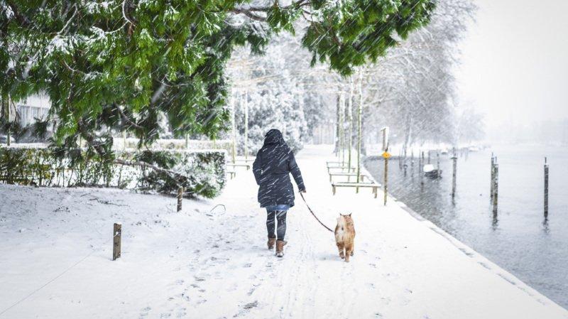 Météo: la neige est tombée jusqu'en plaine, mais pas en Romandie