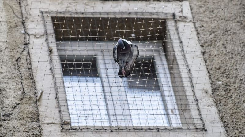 Une quinzaine de pigeons morts ont par exemple été trouvé à la rue Neuve.
