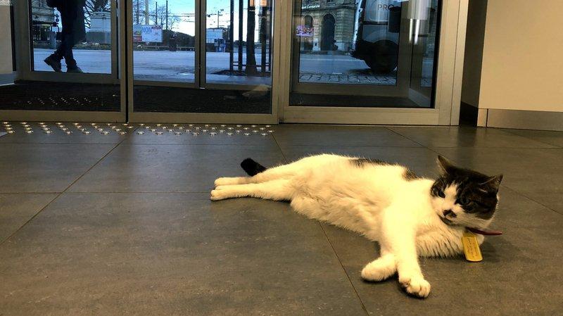 Neuchâtel: le chat de la BCN a changé de banque