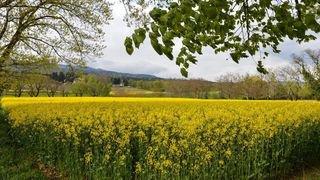 Marche forcée vers le bio pour les domaines de l'Etat de Neuchâtel