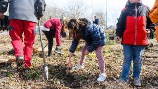 Des jeunes ont planté des chênes à La Tène