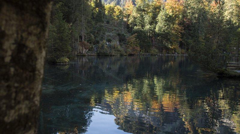 Le sous-sol des forêts de Suisse et d'Europe centrale est d'une richesse insoupçonnée (illustration).
