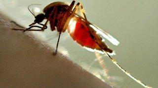 Réchauffement: dengue sur la Côte d'Azur, chikungunya en Italie, les maladies tropicales vont s'installer en Europe
