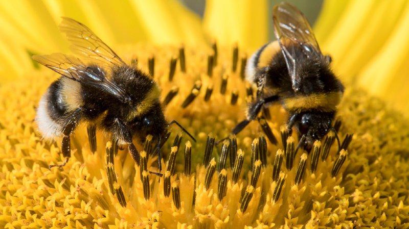 Pro Natura lance une campagne pour assurer la survie des insectes
