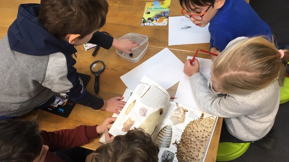 Neuchâtel: pourquoi les écoles alternatives cartonnent