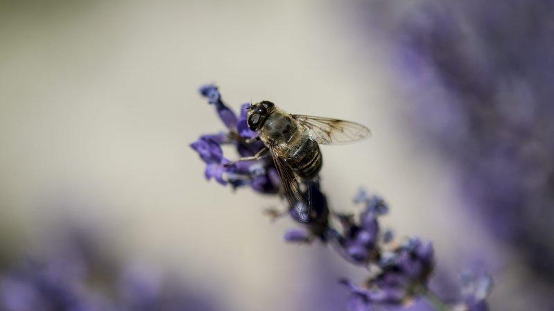 La Fête de la nature mettra à l'honneur ce week-end tous les petits bonheurs miniatures de notre environnement.