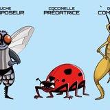 Exposition insectes et abeilles
