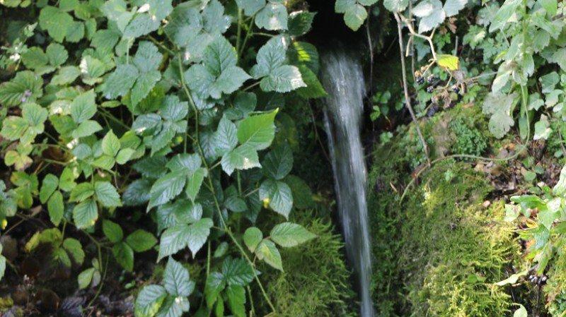 50% des sources d'eau détruites ou fortement dégradées dans le Jura
