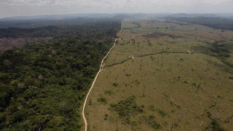 La déforestation tropicale empêche les espèces sauvages de se déplacer vers des climats plus frais. (Illustration)