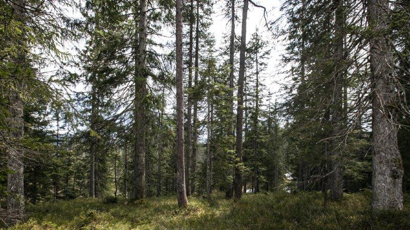Environnement: en 10 ans, la flore sauvage a changé sous l'effet du dérèglement climatique