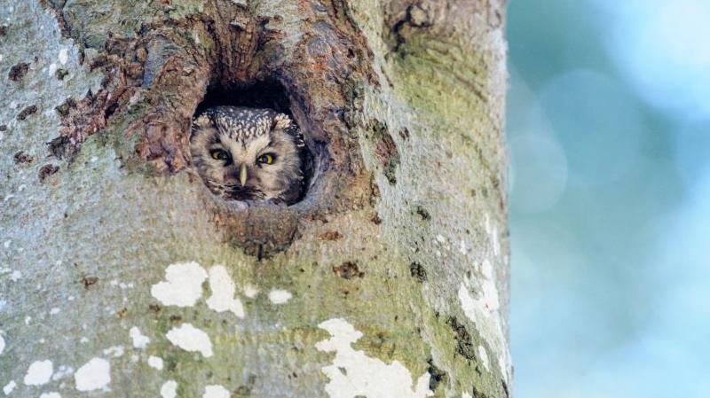 Les arbres du Parc Chasseral, habitats rêvés des animaux