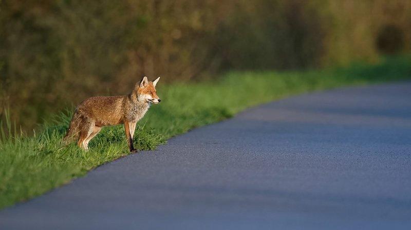 L'activité humaine, un obstacle pour la faune.