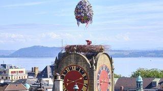 Neuchâtel: l'œuf de Mandril a quitté son nid de la Tour de Diesse
