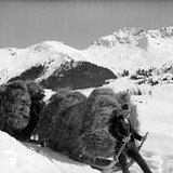 Mémoire en images - Le retour de l'hiver