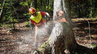 Corcelles: des forestiers face à la mort des arbres