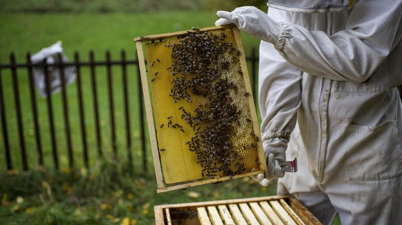 Agriculture: récolte de miel historiquement basse dans toute la Suisse