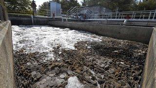 Le Jura s'attaque à l'utilisation des phytosanitaires