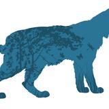 Lynx, qui es-tu?