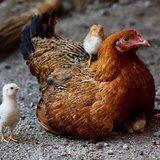 Pâques à la ferme