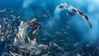 Environnement: en se réchauffant, les océans perdent leur oxygène. La vie marine menacée