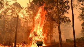 Australie: une centaine d'incendies de forêt ravagent l'est du pays