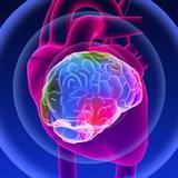 Les mystères du coeur, Anatomie spirituelle